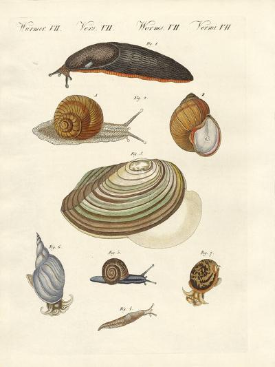 German Snails--Giclee Print