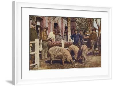 German Soldiers Slaughtering Pigs Behind the Front Line, World War I, 1914-1916--Framed Photographic Print