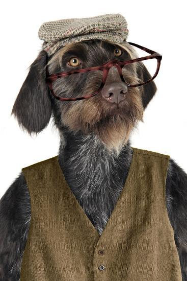 German Wire-Haired Pointer with Hat Glasses--Photographic Print
