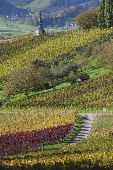 Germany, Baden-Wurttemburg, Black Forest, Gengenbach, Hillside Vineyards in Fall-Walter Bibikow-Photographic Print