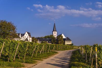 Germany, Hesse, Main-Taunus District, Hochheim Am Main, Vineyards-Udo Siebig-Photographic Print