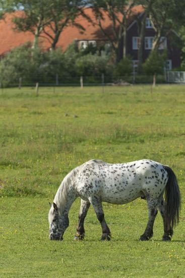 Germany, Lower Saxony, East Friesland, Langeoog, horse on the pasture.-Roland T. Frank-Photographic Print