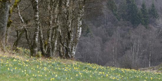 Germany, North Rhine-Westphalia, Rur Eifel (Local Recreation Area-Andreas Keil-Photographic Print