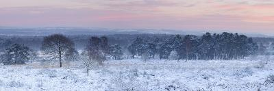 Germany, North Rhine-Westphalia, Wahner Heide, View from the Telegrafenberg in Winter at Sunrise-Andreas Keil-Photographic Print
