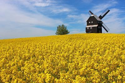 Germany, Saxony, Oberlausitz, Kottmarsdorf, Post Mill, Rape Field-Jule Leibnitz-Photographic Print