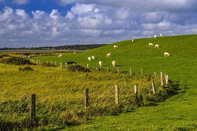 Germany, Schleswig-Holstein, North Frisia, 'Husumer Bucht' (Bay), Husum, Dockkoog, Dyke, Sheeps-Udo Siebig-Photographic Print
