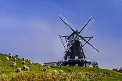 Germany, Schleswig-Holstein, North Frisia, Island of Pellworm, NordermŸhle-Udo Siebig-Photographic Print