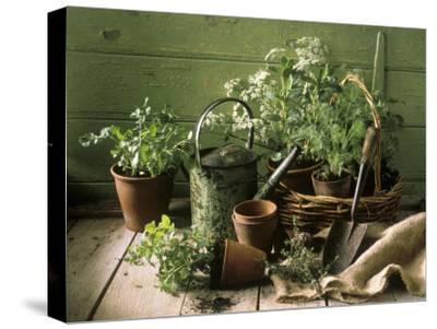 Still Life with Various Herbs in Pots