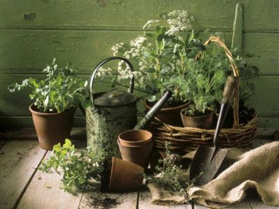 Still Life with Various Herbs in Pots by Gerrit Buntrock