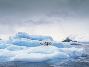 Adelie Penguin (Pygoscelis Adeliae) Group on Iceberg, Antarctic Peninsula by Gerry Ellis