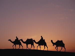 Egyptians Riding Camels across Desert Near the Pyramids of Giza at Sunset, Cairo, Egypt by Gerry Ellis