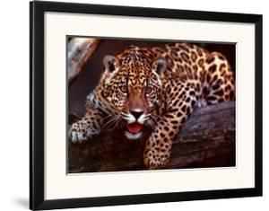 Jaguar by Gerry Ellis