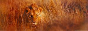 Me, the King by Gerry Ellis