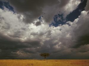 Storm Front and Acacia Trees (Acacia Drepanolobium), Masai Mara National Reserve, Kenya by Gerry Ellis
