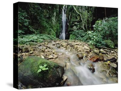 Waterfall on Gombe Stream in Low Montane Tropical Rainforest, Tanzania