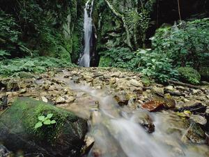 Waterfall on Gombe Stream in Low Montane Tropical Rainforest, Tanzania by Gerry Ellis