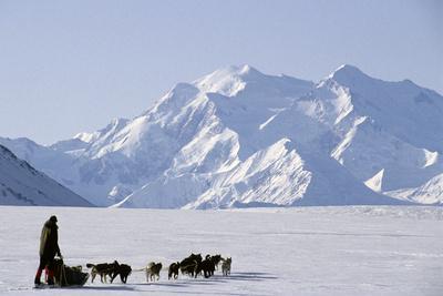 Sled Dogs, Park Ranger, Mount McKinley, Denali National Park, Alaska, USA