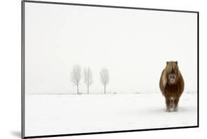The Cold Pony by Gert Van Den
