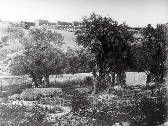 Gethsemane, 1857-James Robertson and Felice Beato-Photographic Print