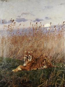 Tiger in the Rushes by Geza Vastagh