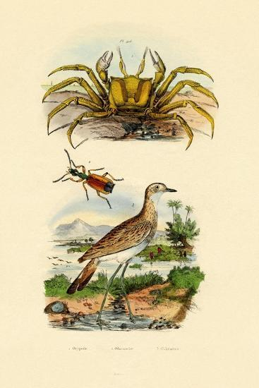 Ghost Crab, 1833-39--Giclee Print