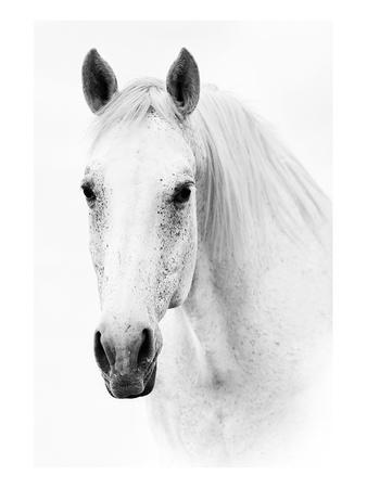 https://imgc.artprintimages.com/img/print/ghost-equus_u-l-f7p6980.jpg?p=0