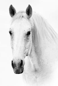 Ghost Equus