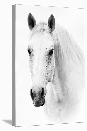 Ghost Equus--Stretched Canvas Print