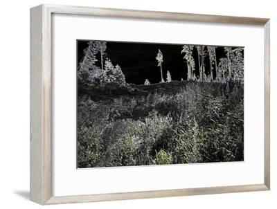 ghost forest,2017-Alex Caminker-Framed Giclee Print