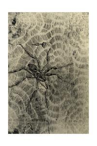 Spider and Lace by GI ArtLab
