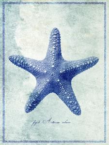 Starfish B by GI ArtLab