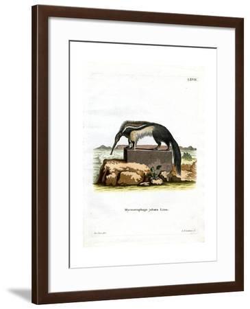 Giant Anteater--Framed Giclee Print