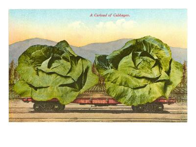 Giant Cabbages on Flatbed--Art Print