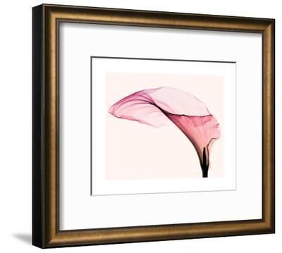 Giant Calla (small)-Steven N^ Meyers-Framed Art Print