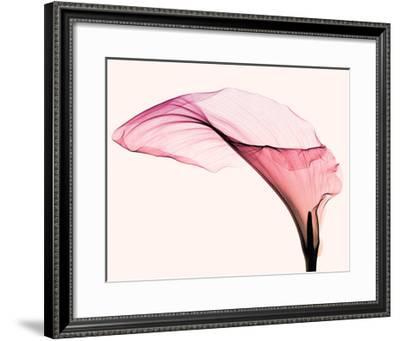 Giant Calla-Steven N^ Meyers-Framed Giclee Print