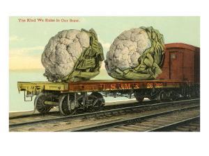 Giant Cauliflower on Flatbed