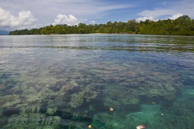 Giant Clams in the Clear Waters of the Marovo Lagoon, Solomon Islands, Pacific-Michael Runkel-Photographic Print