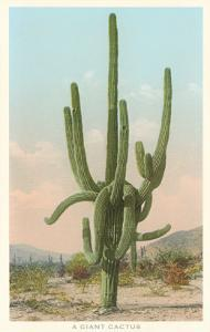 Giant Multi-Armed Saguaro Cactus