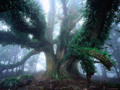 Giant Myrtle-Rob Blakers-Photographic Print