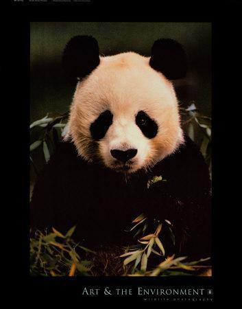 https://imgc.artprintimages.com/img/print/giant-panda-feeding-on-bamboo_u-l-e6xbb0.jpg?p=0
