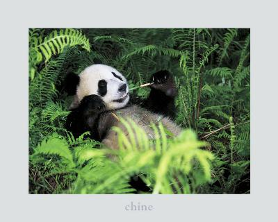 Giant Panda, Szechwan Province, China-Fernandez-Art Print