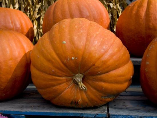 Giant Pumpkins Await Halloween Buyers-Stephen St^ John-Photographic Print