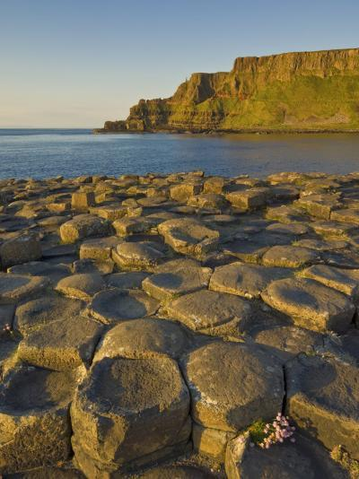 Giant's Causeway Near Bushmills, County Antrim, Ulster, Northern Ireland, UK-Neale Clarke-Photographic Print