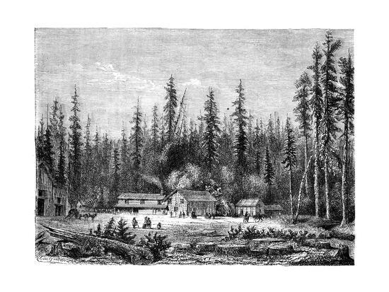 Giant Sequoia Forest, California, 19th Century-Paul Huet-Giclee Print