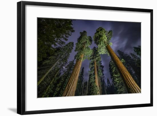 Giant Sequoia Trees in the Old Growth Forest of California's Sequoia National Park-Keith Ladzinski-Framed Photographic Print