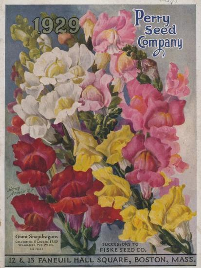 Giant Snapdragons from the Perry Seed Company--Art Print
