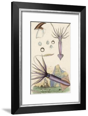 Giant Squid and a Squid of the Fishermen- Du Casse-Framed Giclee Print