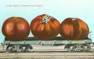 Giant Tomatoes on Flat Bed