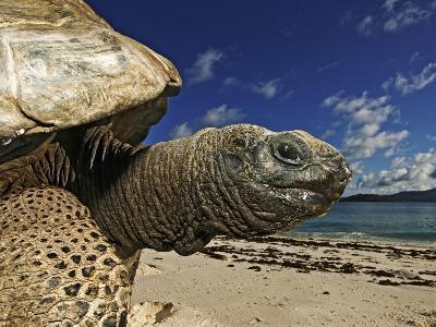 Giant Tortoise on the Beach-Martin Harvey-Photographic Print