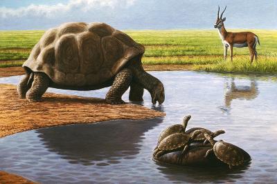 Giant Tortoise-Mauricio Anton-Photographic Print